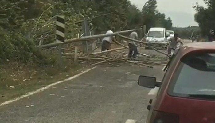 Bursa'da şiddetli rüzgar ağaçları devirdi, yol trafiğe kapandı thumbnail