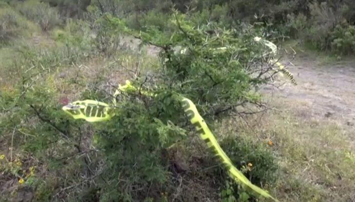 Meksika'da gizli mezarlarda 23 ceset bulundu
