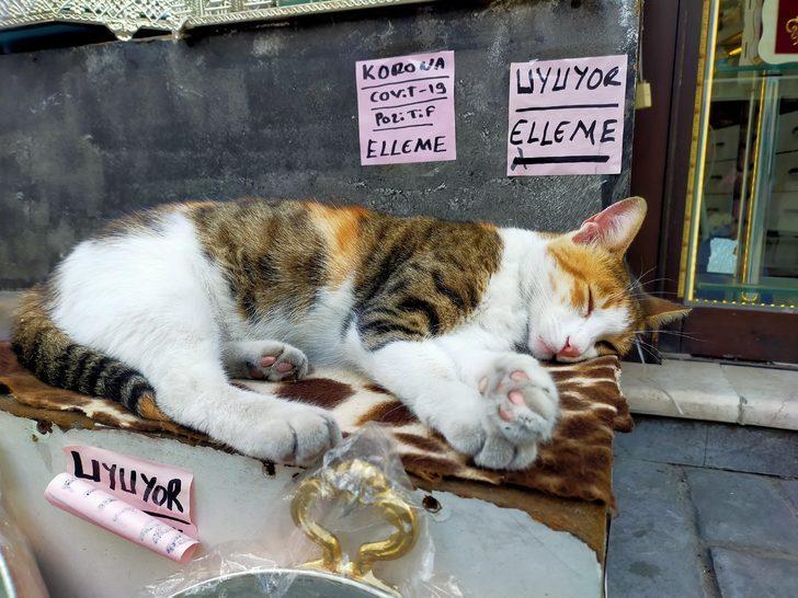Kedisi uyandırılmasın diye, 'Covit-19 pozitif, elleme' yazısı astı