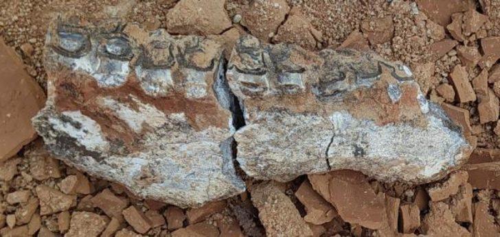 Denizli'de karıncayiyen ve fil fosili bulundu! 7 ila 9 milyon yıl önce yaşamış