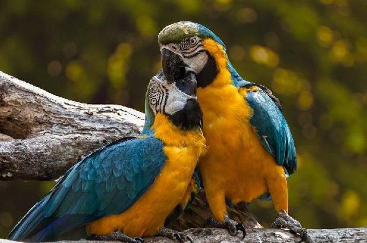 İngiltere'de karantinada kalan 5 papağan, birbirlerine küfür öğretti