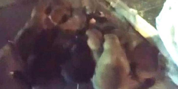 Büyük vicdansızlık! Yavru köpekler çuval içerisinde sokağa atıldı