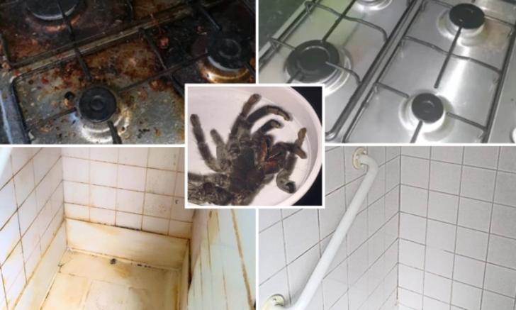 Yerdeki dışkı torbalarından, dolaptaki tarantulaya. Dünyanın en kirli evleri
