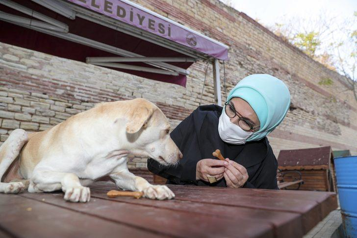 Emine Erdoğan, engelli köpek 'Leblebi'yi sahiplendi