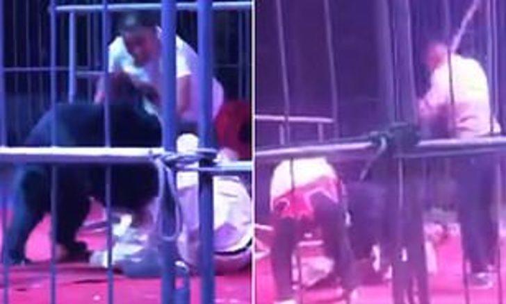 Çin'de sirkte gösteri yapan ayı terbiyecisine saldırdı