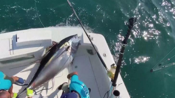 37 kilogram güce dayanacak misinayla 260 kilogramlık balık yakaladı