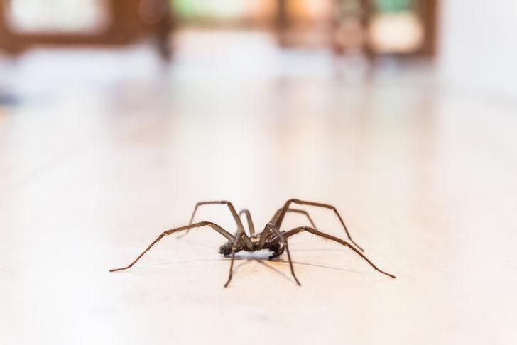 Bunu kesinlikle deneyeceksiniz... Tek püskürtmeyle örümceklerin kaçışını izleyeceksiniz