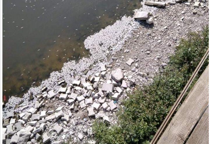 Ankara'daki Çayırhan Gölü'nde toplu balık ölümü