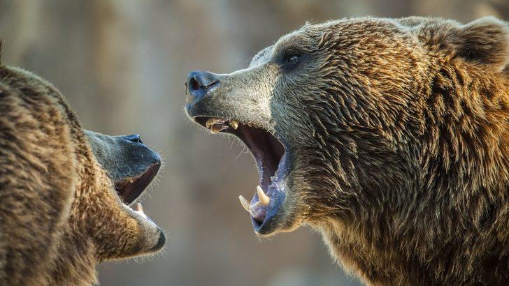 Çin'de vahşi yaşam parkı çalışanı, ayıların saldırısı sonucu hayatını kaybetti