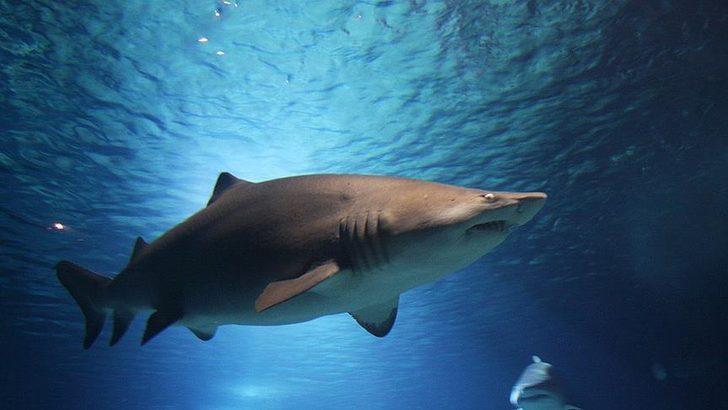 Meksika'da köpek balığı turist kadınların dalış yaptığı kafese saldırdı