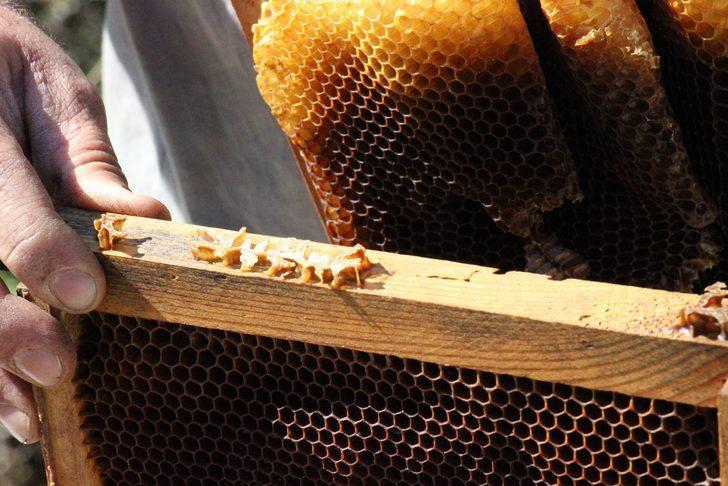 İlginç olay! Arılar 'Allah' yazısı yazıp, kovanı terk ediyor