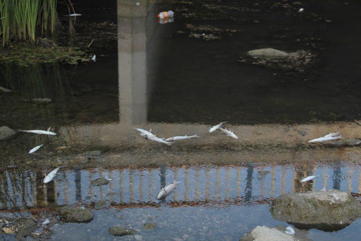 Yer: Antalya! Yüzlerce balık telef oldu