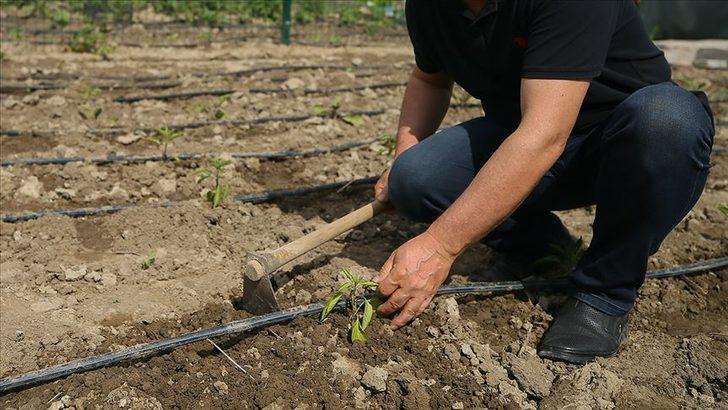Tarım arazilerini hobi bahçesi olarak pazarlayanlara hapis cezası geliyor