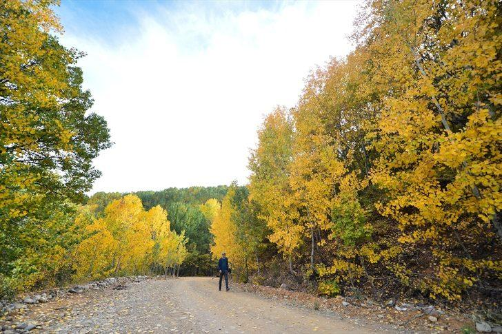 Salördek Köyü Ormanları sonbaharda Tunceli'nin gözdesi oldu