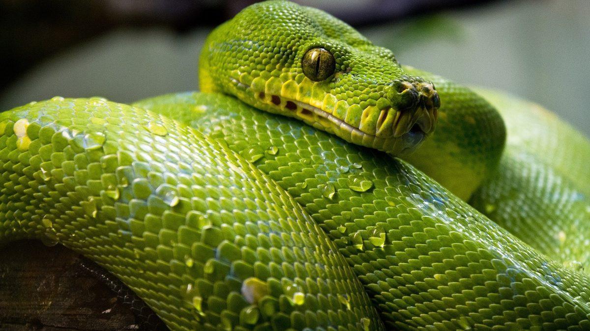 Rüyada yeşil yılan görmek ne demek, ne anlama gelir? - Mynet trend