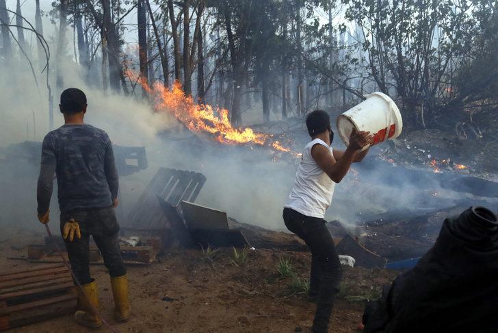 30 yıllık 100 palmiye ağacı yangında küle döndü