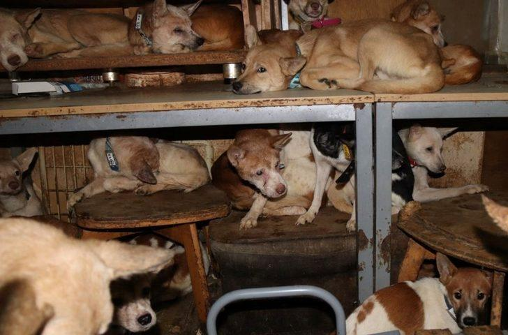 30 metrekarelik evde 164 köpek ile yaşıyorlar