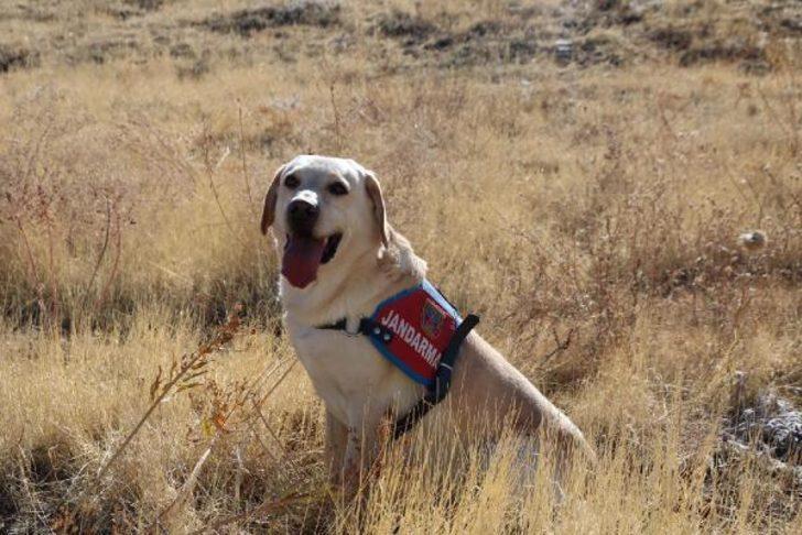 Alzheimer hastası Hatun nineyi jandarma köpeği 'Dost' buldu
