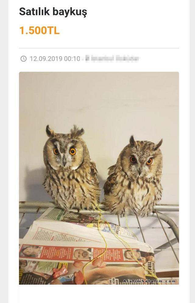 internetten-hayvan-satanlara-pet-marketlerden-tepki-yilan-baykus-akrep-bile-satiyorlar_5239_dhaphoto2