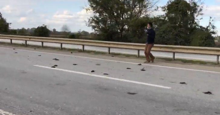 Sakarya'da kuşların esrarengiz ölümü! İnceleme başlatıldı