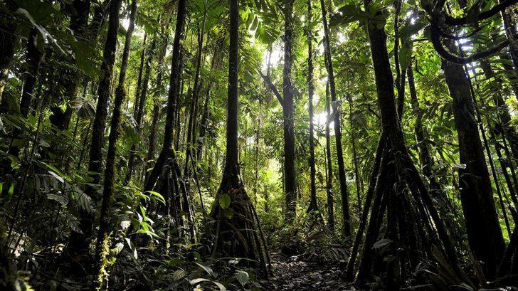 Doğanın Büyüsü: Yürüyen Ağaçlar