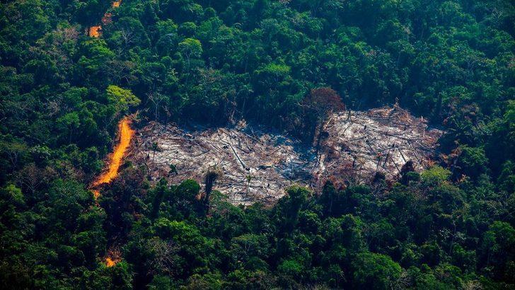 Brezilya: Amazonlar'daki orman kaybı son 12 yılın en yüksek düzeyinde