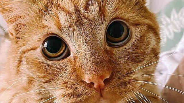 Bu kediyi tanıdınız mı?