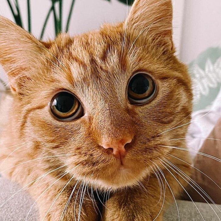 Gerçek hayattaki Çizmeli Kedi bulundu!