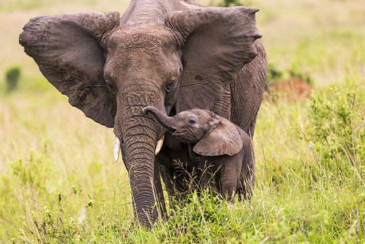 Dünya Yaban Hayatı Günü'nde gözler Afrika'da!