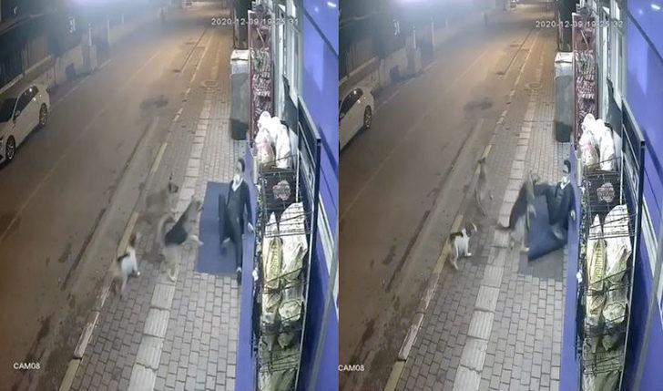 Sokak köpeklerinin saldırısından tekmeyle kurtuldu