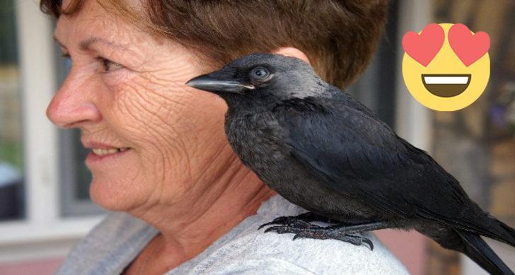 Bu karga kendini muhabbet kuşu sanıyor: Aşırı tatlı Yakup ile tanışın!