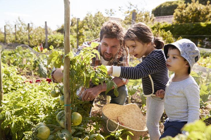Köylü- çiftçi yapılandırma 2020 başvurusu... Çiftinin Tarım Kooperatifleri kredi borcu yapılandırılıyor mu?