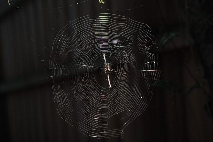Örümcekler uzayda: Yerçekimsiz ortamda ağ örülebilir mi?