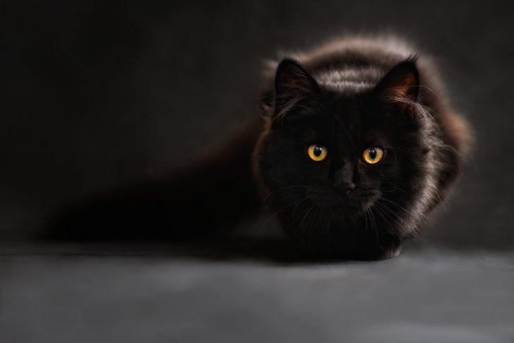 Rüyada kara kedi görmek ne demek, ne anlama gelir?