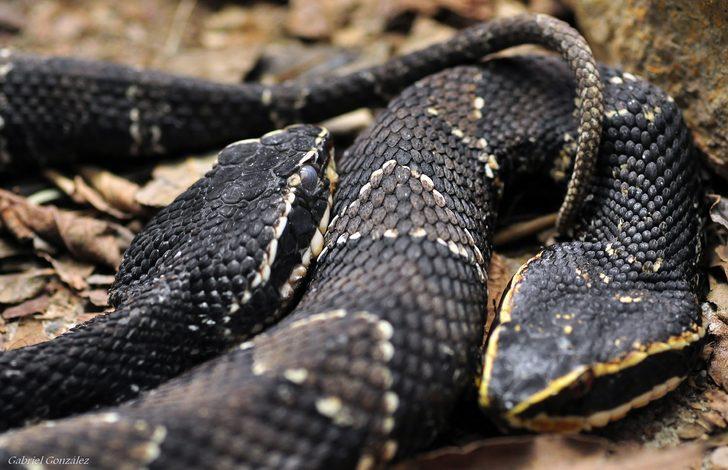 Rüyada kara yılan görmek ne demek, ne anlama gelir?