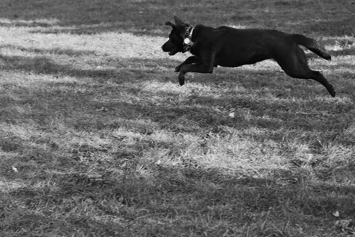 Rüyada köpekten kaçmak ne demek, ne anlama gelir?