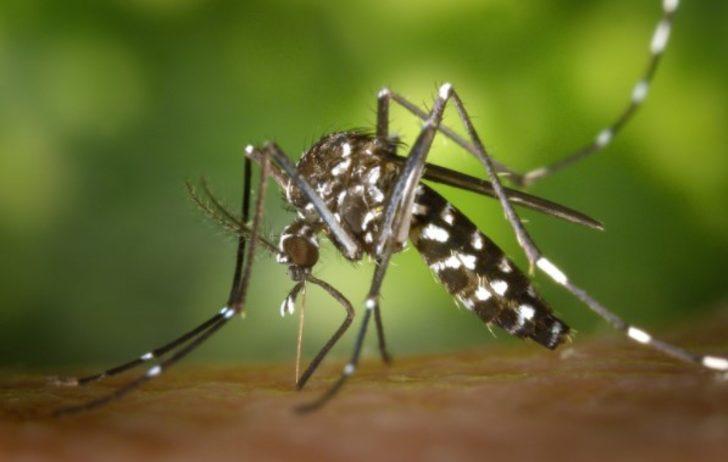 Sarı humma hastalığı nedir? Sarı humma aşısı hastalıktan korur mu?