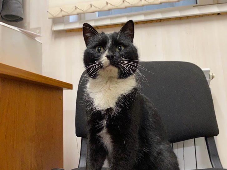 Rusya'da atık artıma tesisinde bulunan kedi, 'Çevre Bakanı Yardımcısı' oldu