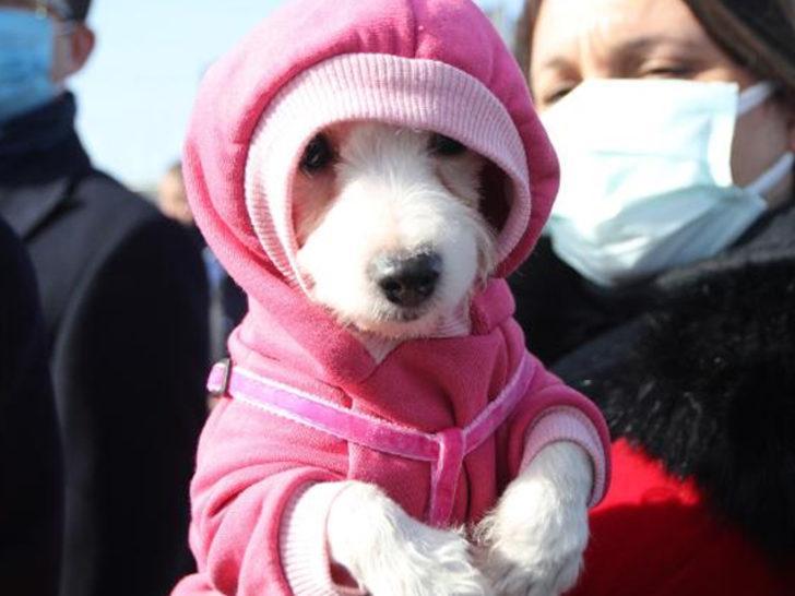 Ankara'da ses telleri kesilen köpeklerin sahibine rekor para cezası