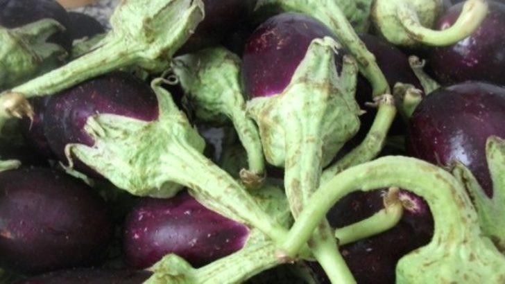 Basurun bitkisel tedavisi için patlıcan sapı