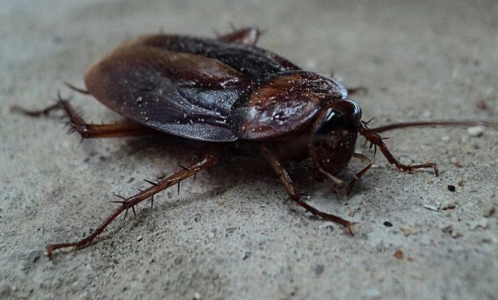 Rüyada böcek öldürmek ne demek, ne anlama gelir?
