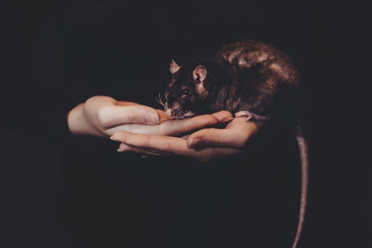 Rüyada büyük fare görmek ne demek, ne anlama gelir?