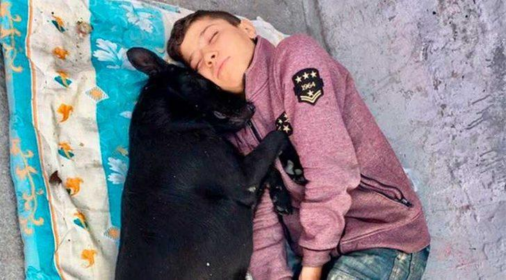 Bu dostluk gözlerimizi yaşarttı: Suriyeli Hasan sokak köpeği Zeytin'i ailesi yerine koydu