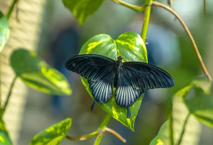 Tropikal kelebek bahçesi - Konya tropikal kelebek bahçesi nerede, giriş ücreti