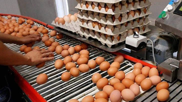 Avrupa'daki 'zehirli yumurta' skandalının ardından bakanlıktan inceleme