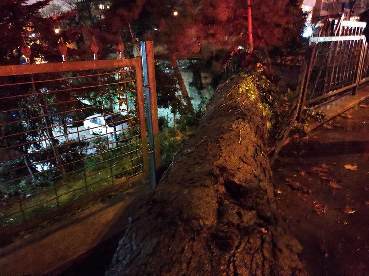 Beşiktaş'ta asırlık çınar ağacı devrildi