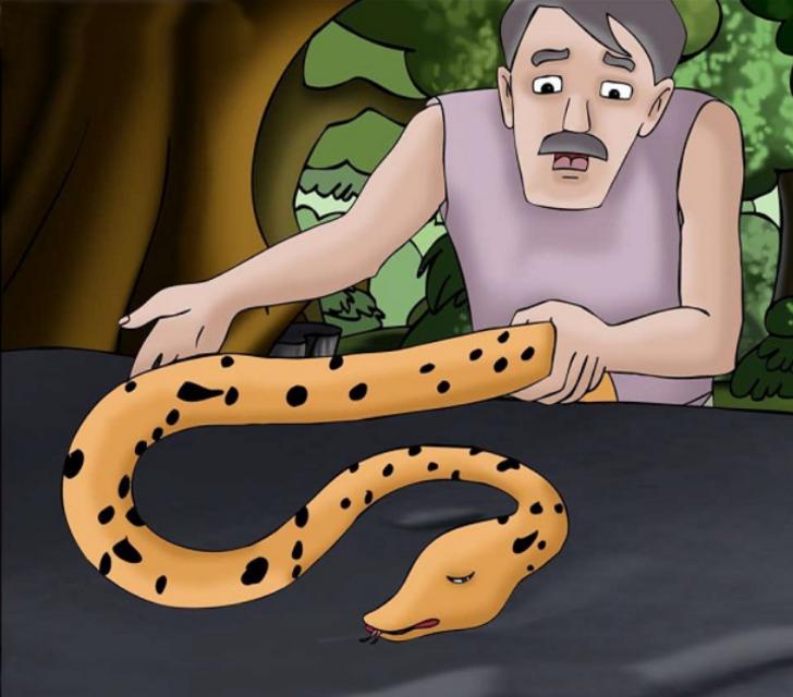 Deyimlerin ortaya çıkış hikayesini hiç merak ettiniz mi? 'Kuyruk acısı' deyimi bilge ve yılanın dostluğuna dayanıyor!