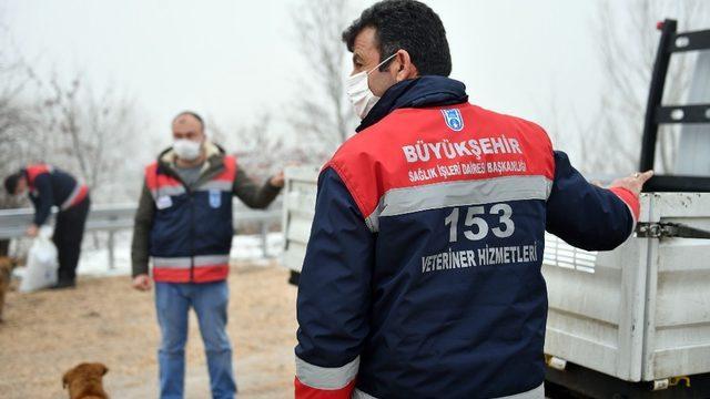Ankara Büyükşehir Belediyesi sokak hayvanlarına mama ve besin desteğini artırdı