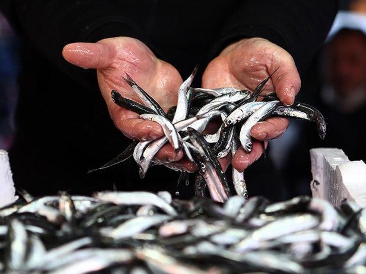 Hamsi avcılığı kısıtlaması 28 Ocak'a kadar uzatıldı