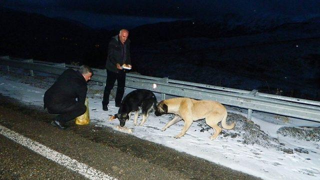 Hayvan sevgisi dağlardaki hayvanları da doyuruyor